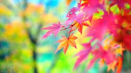 4K Colorful Leaves Wallpaper