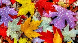 4K Colorful Leaves Wallpaper For PC