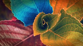4K Colorful Leaves Wallpaper Free