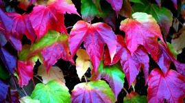 4K Colorful Leaves Wallpaper Gallery