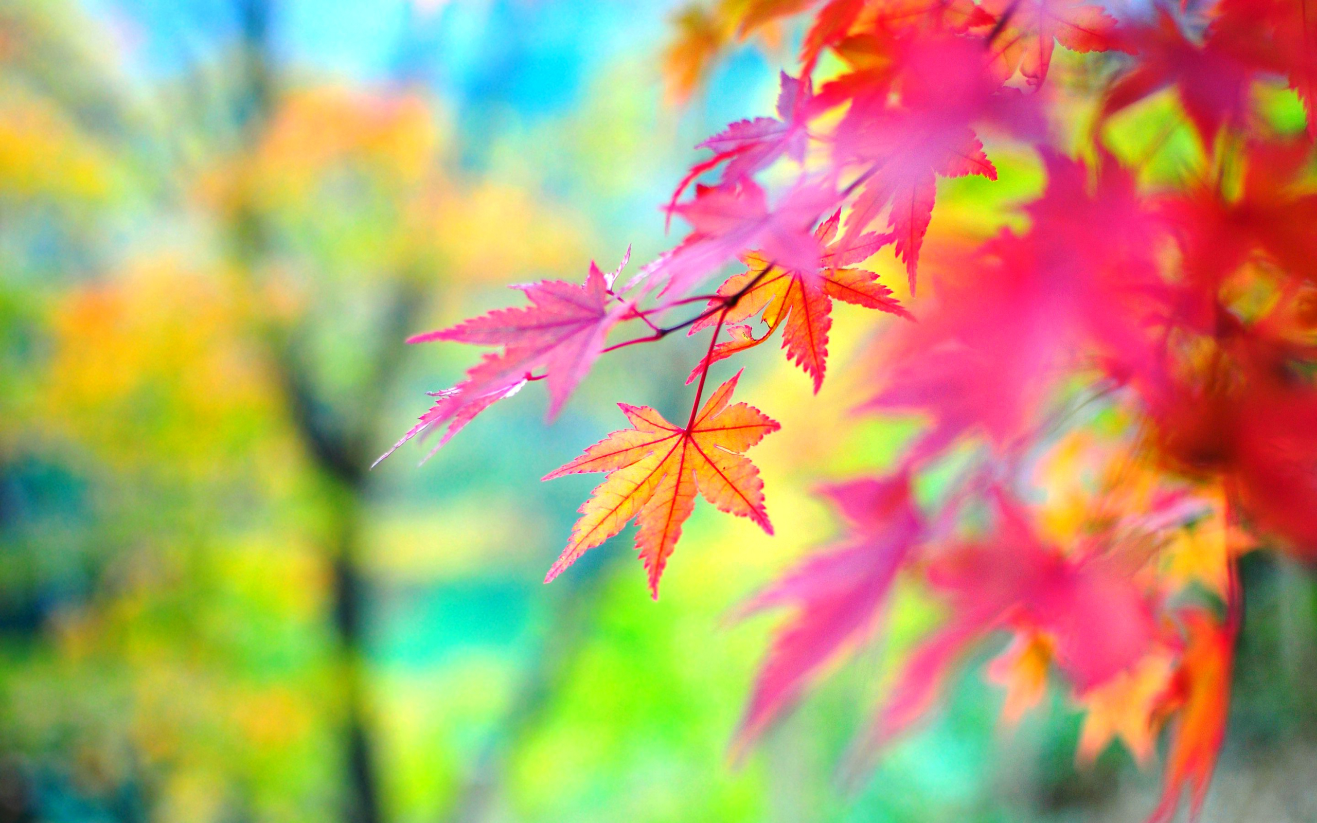 4K Colorful Leaves Wallpapers High Quality