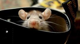 4K Mice Photo