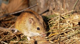 4K Mice Photo Download