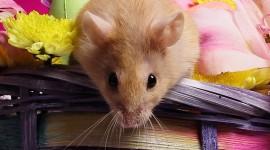 4K Mice Photo Free