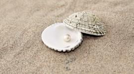4K Shell With Pearl Desktop Wallpaper