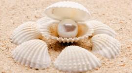 4K Shell With Pearl Desktop Wallpaper HD