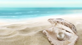 4K Shell With Pearl Photo Download