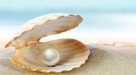 4K Shell With Pearl Wallpaper For PC