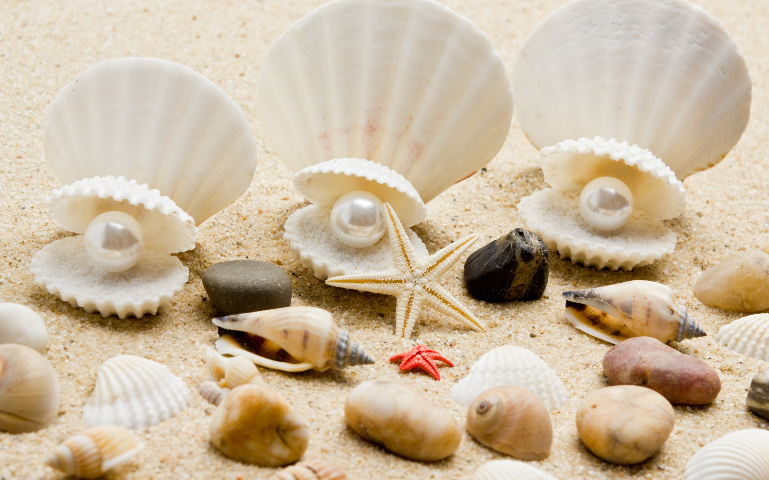 4K Shell With Pearl Wallpapers High Quality | Download Free