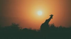 4K Silhouette Sunset Photo Free
