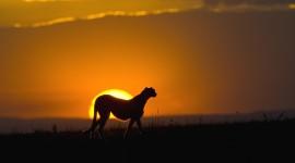 4K Silhouette Sunset Wallpaper 1080p