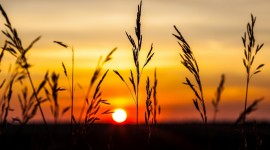 4K Silhouette Sunset Wallpaper