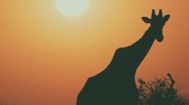 4K Silhouette Sunset Wallpaper For IPhone