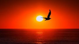 4K Silhouette Sunset Wallpaper Full HD