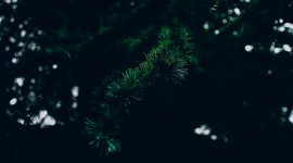 4K Spruce Wallpaper Download Free