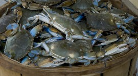 Blue Crab Desktop Wallpaper HD