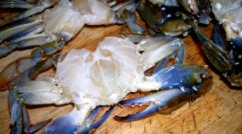 Blue Crab High Quality Wallpaper