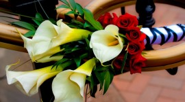 Callas Flowers Photo