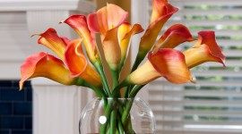 Callas Flowers Wallpaper For Android
