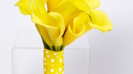 Callas Flowers Wallpaper For IPhone