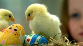 Chicks Wallpaper Download