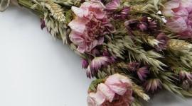 Dry Flowers Photo
