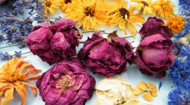 Dry Flowers Photo Download
