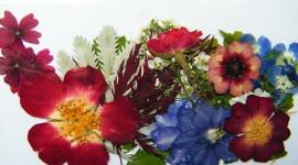 Dry Flowers Photo Free#1