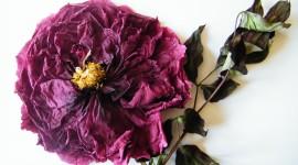 Dry Flowers Photo#1