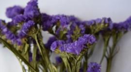 Dry Flowers Wallpaper 1080p