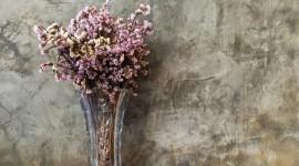 Dry Flowers Wallpaper Download