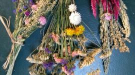 Dry Flowers Wallpaper For Mobile