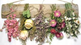 Dry Flowers Wallpaper Free