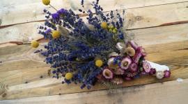 Dry Flowers Wallpaper Gallery