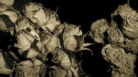 Dry Flowers Wallpaper HQ