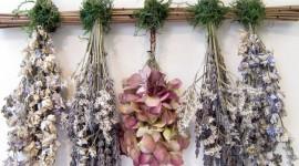 Dry Flowers Wallpaper HQ#1
