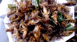 Grasshoppers Food Photo