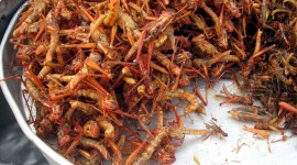 Grasshoppers Food Photo Free