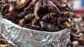 Grasshoppers Food Wallpaper For IPhone