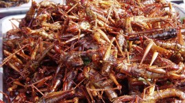 Grasshoppers Food Wallpaper Gallery