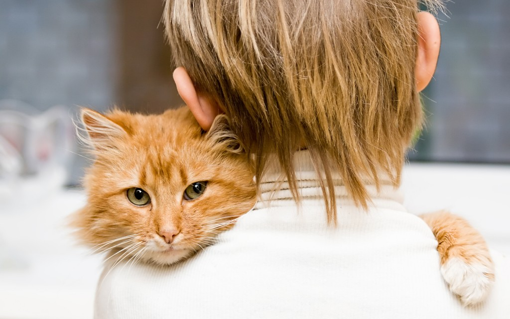 Hugging With A Cat wallpapers HD