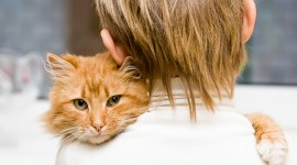 Hugging With A Cat Desktop Wallpaper