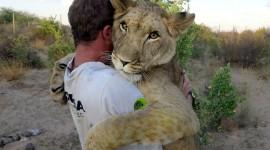 Hugging With A Cat Desktop Wallpaper Free