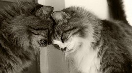 Hugging With A Cat Desktop Wallpaper HD