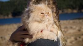 Hugging With A Cat Wallpaper For Desktop