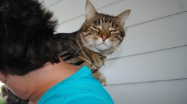 Hugging With A Cat Wallpaper Gallery
