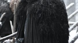 Jon Snow Wallpaper For IPhone Free