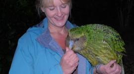 Kakapo Wallpaper For IPhone Free