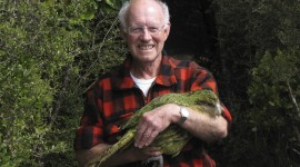 Kakapo Wallpaper HD