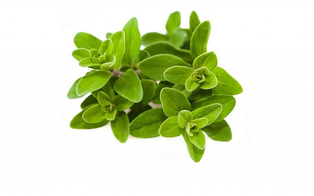 Marjoram wallpapers HD